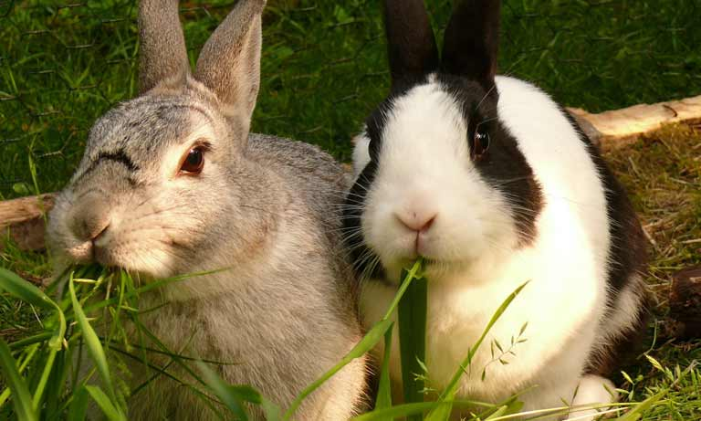 The UK's pet rabbits are lonely hearts looking for companionship, say vets Listing Image