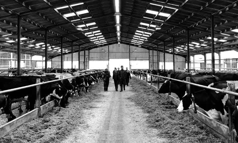 Vets must be at the heart of new Trade and Agriculture Commission, says BVA Listing Image