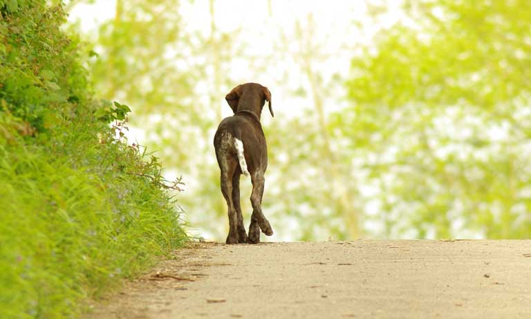BVA response to stray dogs study Listing Image