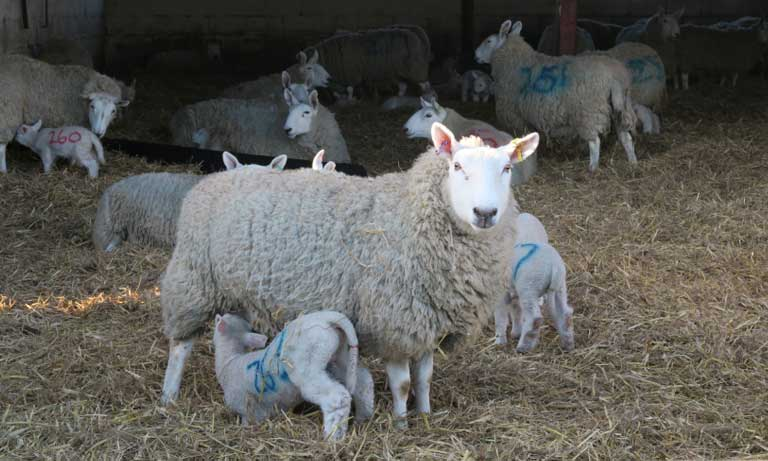Veterinary input vital as Agriculture Act comes into law, says BVA Listing Image