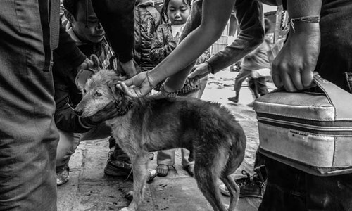 vaccinating a dog