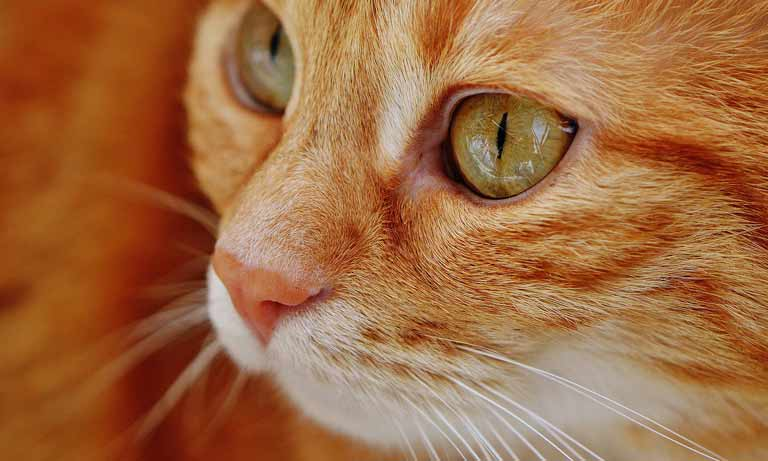 Vets offer reassurance after pet cat tests positive for Covid-19 in the UK Image