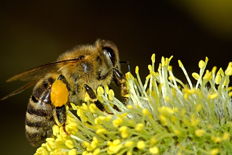 Bee the change: Veterinary practices taking the lead in protecting honeybees  Listing Image