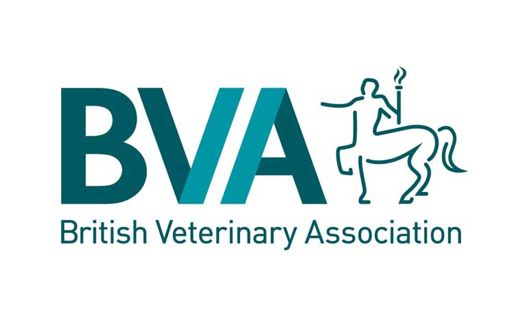 BVA reflects on what we're doing to support Black Lives Matter in the veterinary community  Image