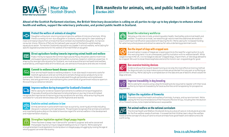 Vets in Scotland launch 12 pledges for animals, workforce and public health ahead of Scottish Parliament Election Listing Image